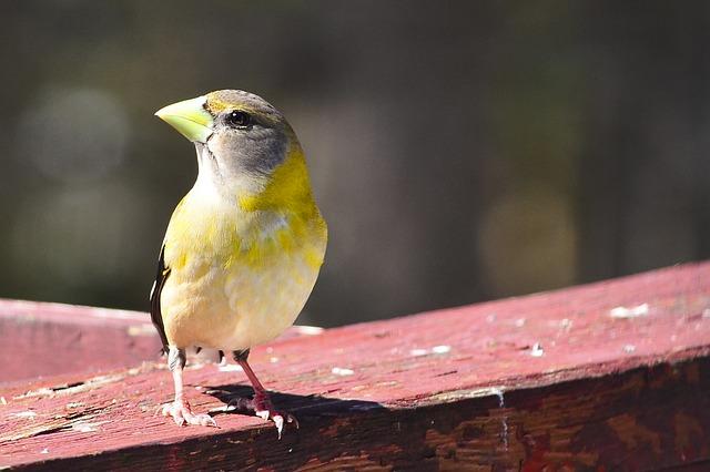 モン・トランブランの鳥